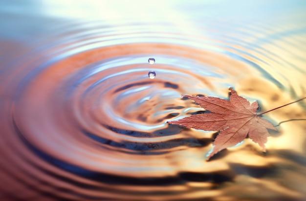 水の上の乾燥したマープルリーフ、トーンの秋