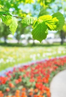 Весенний сад фон с тюльпанами