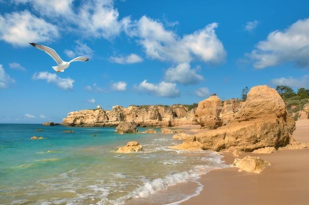 Чайка летит над золотым пляжем возле албуфейра, португалия