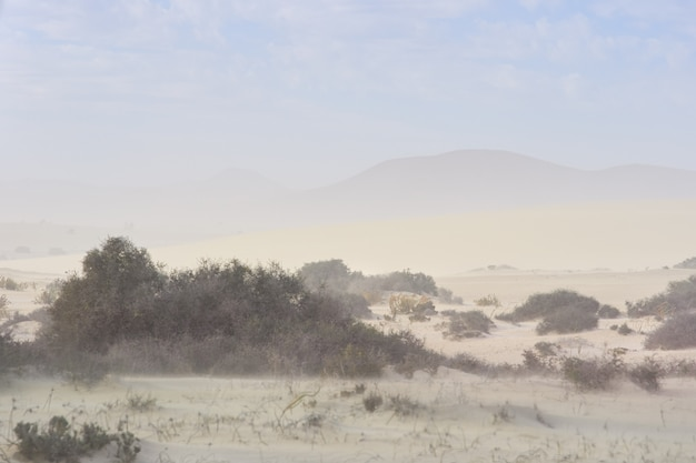 砂丘の砂嵐