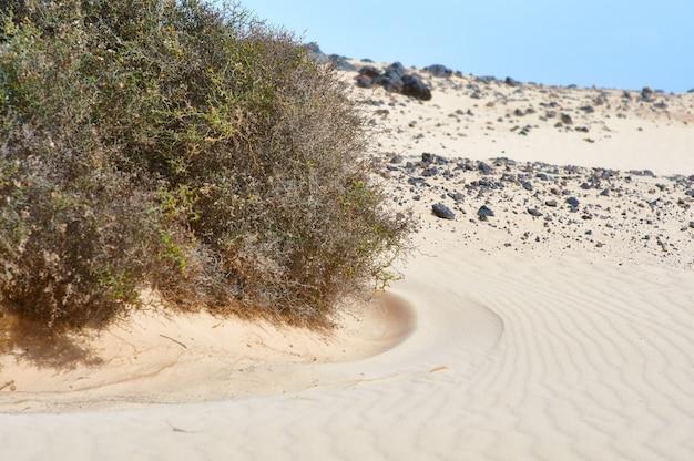 Ксерофильное растение в пустыне,
