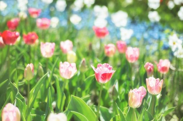 春の庭、背景をぼかした写真の色とりどりの花