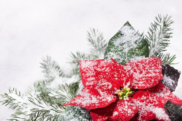 クリスマス植物と雪の下のクリスマスツリー