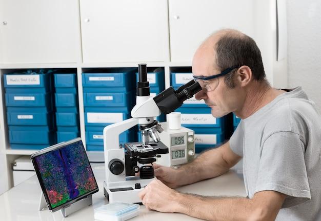 シニア男性科学者または技術は顕微鏡で動作します