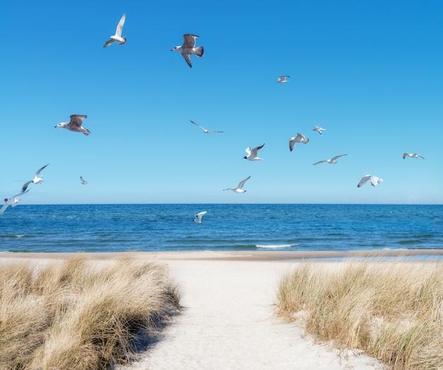 北ドイツ、リューゲン島の海辺