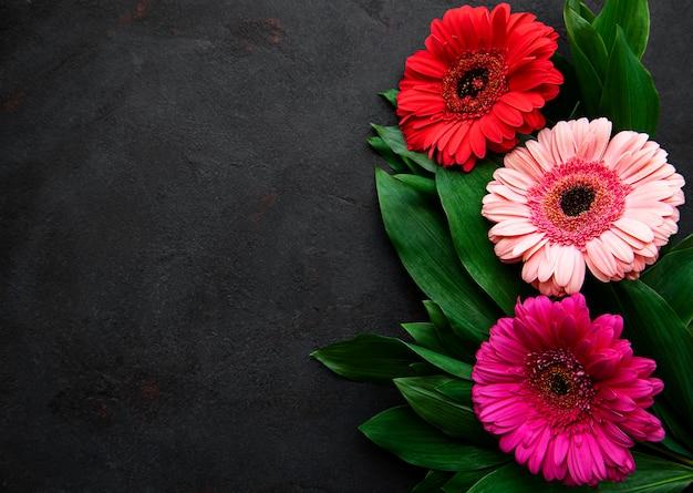 Яркие цветы герберы на черном фоне