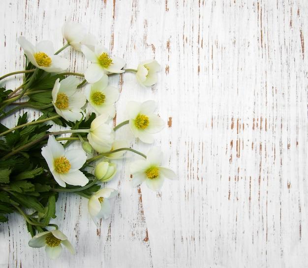 Весенние цветы анемона.