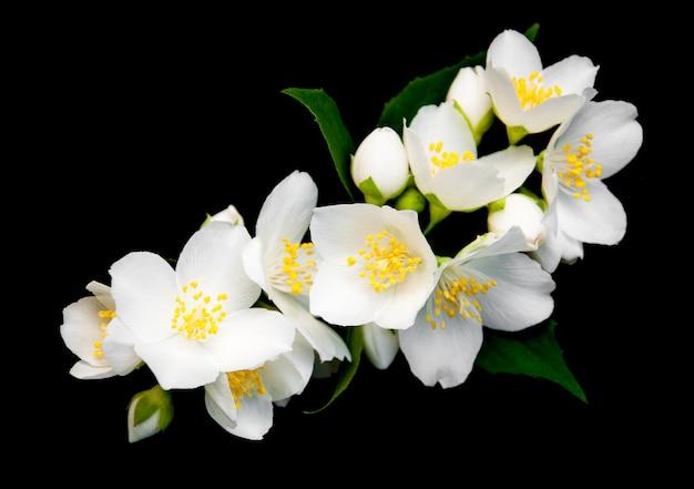 黒のジャスミンの花