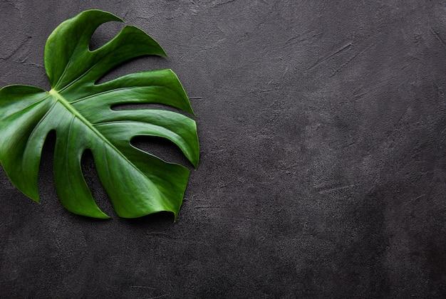 熱帯の葉モンステラ
