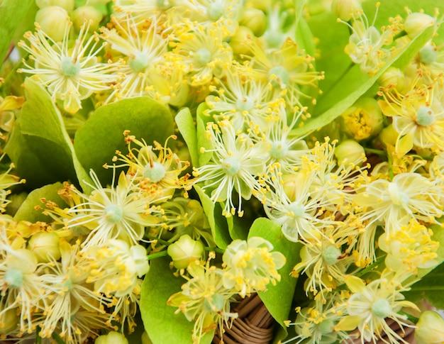 シナノキの花のバスケット
