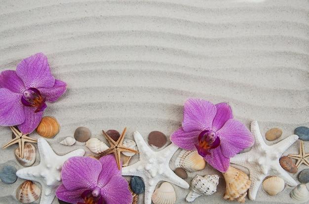 Ракушки и морские звезды границы
