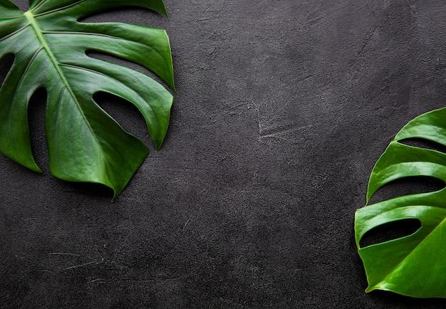 熱帯の葉のモンステラ