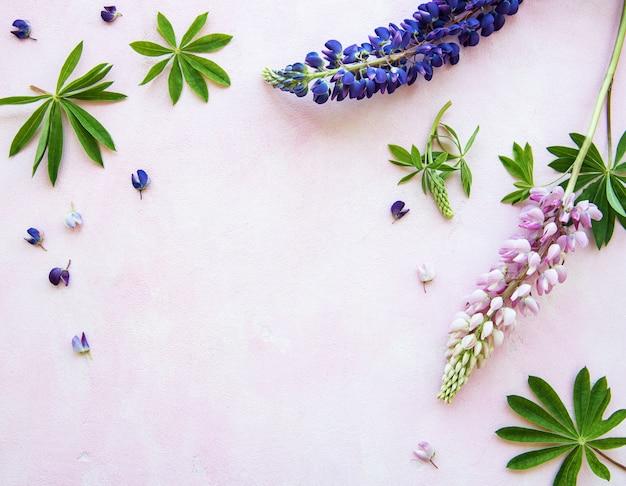 Розовые и фиолетовые цветы люпина