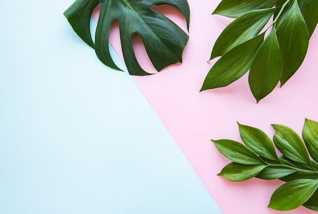 熱帯の葉とモンステラの葉