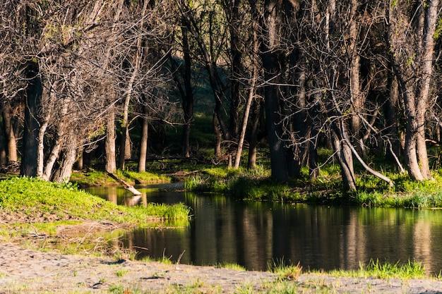 木を流れる川の美しい風景
