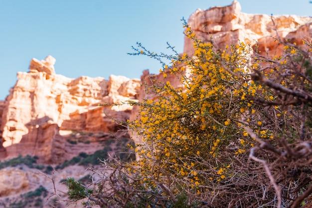 花と山の風景を背景に低木。カザフスタン、チャリンキャニオン。