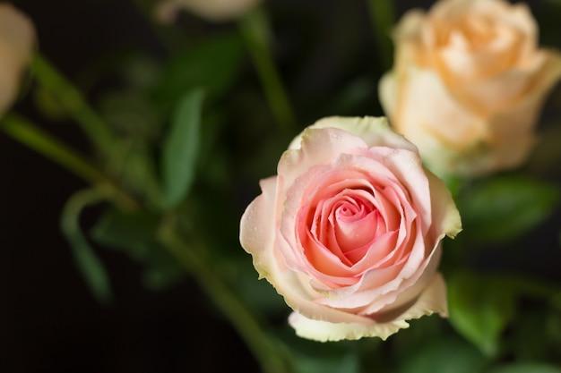 ぼやけた自然にピンクのバラ