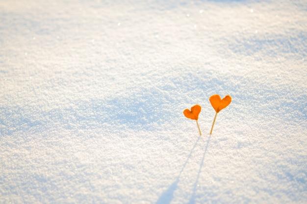 Два старинных оранжевых мандариновых сердца на палках на белом снегу