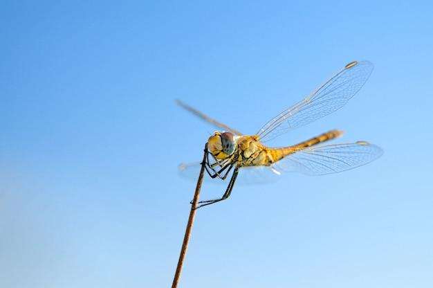 Летняя стрекоза на палочке и голубое небо макро крупным планом
