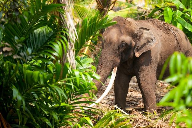 スリランカの森のジャングルの中で若い象。