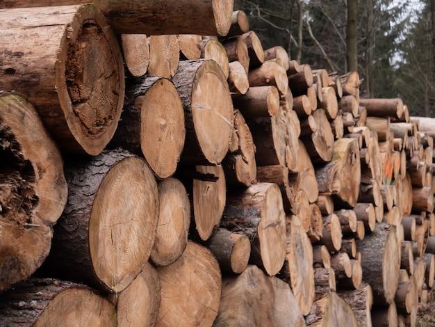 Свежие бревна в лесу в зимнее время