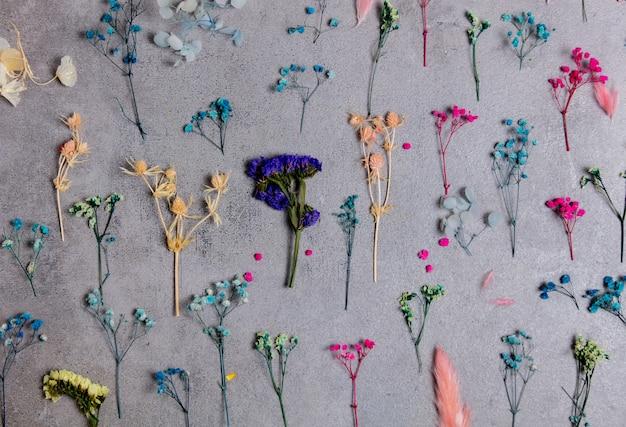 さまざまな植物の乾いた色の枝