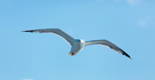 Фото чайки