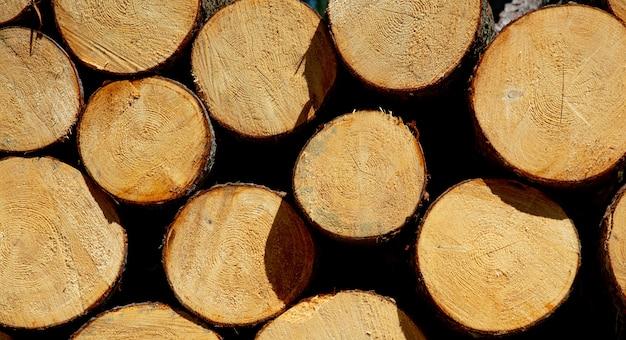 ポーランド、スデテスの森の松の丸太