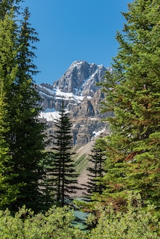 バックグラウンドで大きな山とカナダの森林景観