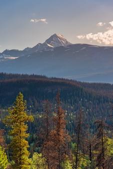 背景、アルバータ州の大きな山とカナダの森林景観