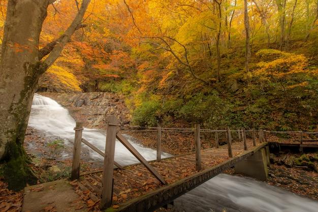 秋の川の近くのハイキングコース