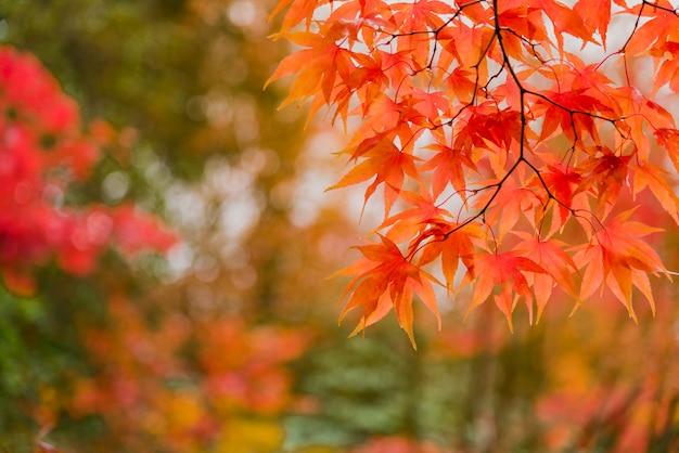 秋のカエデの葉の背景