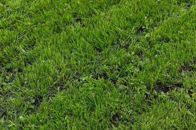 夏の畑、斜めビューの明るい自然の緑の草のテクスチャ
