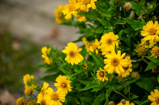 Разнообразие цветов в декоративных горшках и плетеных корзинах.