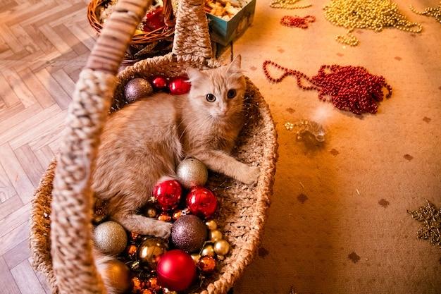 Маленькая милая рыжая кошка спит на диване