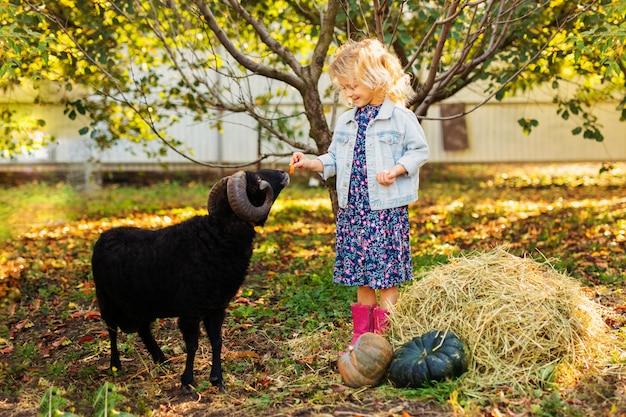 Маленькая кудрявая блондинка в джинсовой куртке и розовых сапогах кормит черных домашних овец. концепция жизни фермера