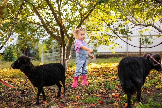 Маленькая белокурая малышка с двумя косами играет и кормит домашних черных овец