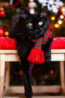 Черная маленькая кошка мейн кун с красно-зеленым шарфом возле елки