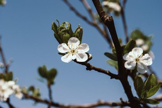 美しい花春の自然の抽象的な背景。枝