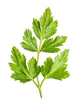Листья петрушки изолированные