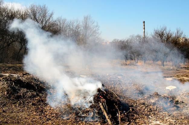 乾燥した森林で火災。
