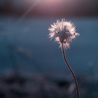 Цветок травы на фоне солнечного света