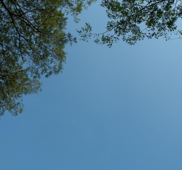 Красивые деревья на фоне неба, ветви дерева, небо
