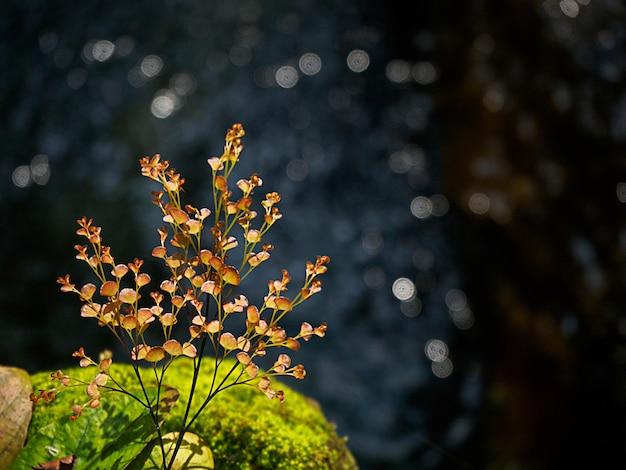 Желтый и зеленый лист в воде с боке солнечного света