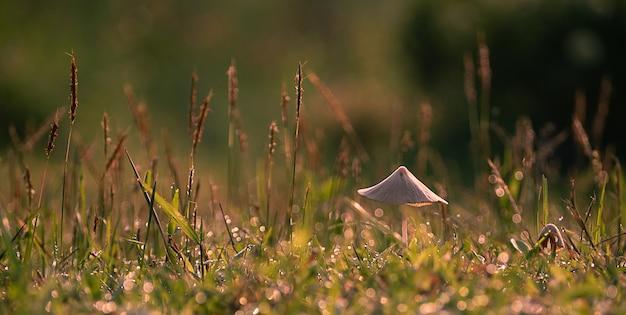Красивый крупный план малый гриб в саде, гриб с зеленым лугом
