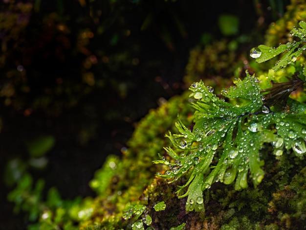 Капля воды на зеленых листьях
