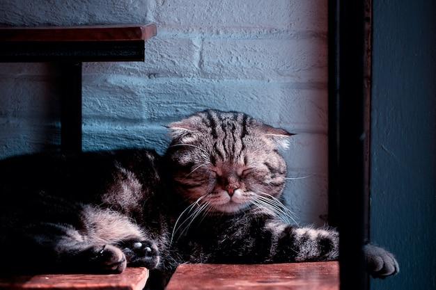 Маленький милый котенок спит в уютной комнате