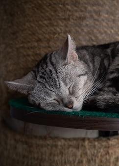 Маленький милый котенок спит в своей мягкой уютной кровати