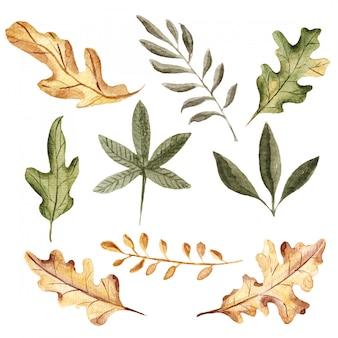 秋の水彩画の葉のコレクション