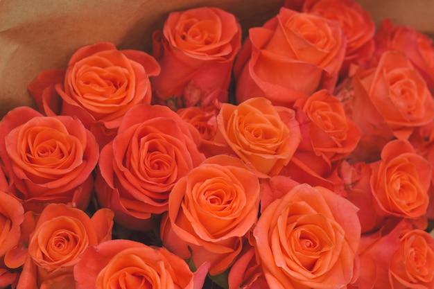 オレンジ色のバラの花のつぼみを閉じる